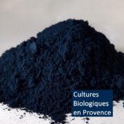 Indigo naturel de renouée (persicaire) / Natural indigo polygonum tinctorium